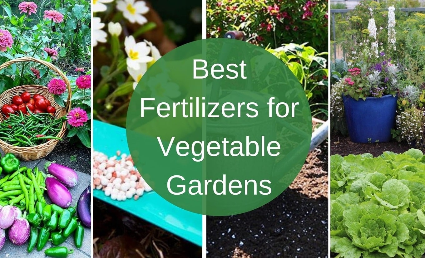 Best Fertilizers for Vegetable Gardens