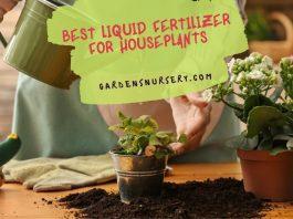 Best Liquid Fertilizer for Houseplants