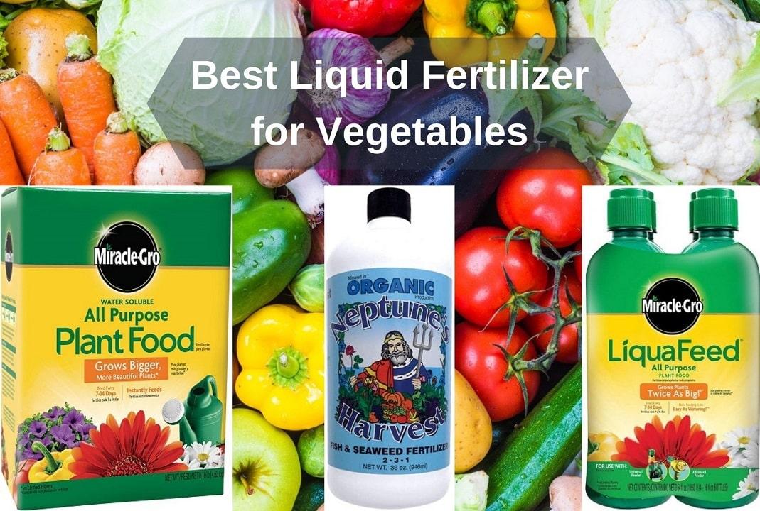 Best Liquid Fertilizer For Vegetables