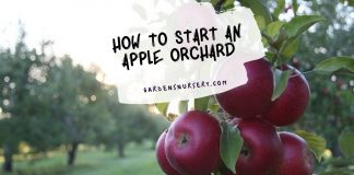 How to Start an Apple Orchard