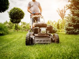 Lawn Care Basics Every Home Owner Should Know