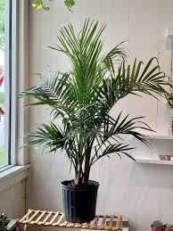 Majestic Plant
