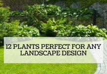 12 Plants Perfect For Any Landscape Design
