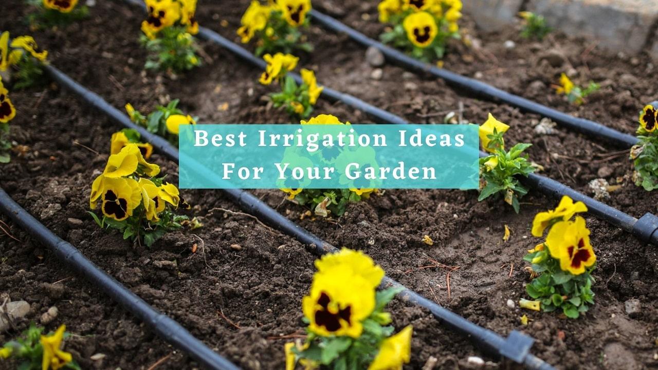 Best Irrigation Ideas For Your Garden