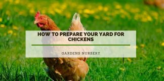 How to Prepare Your Yard for Chickens