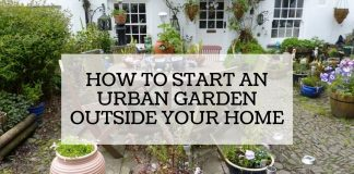 How to Start an Urban Garden Outside Your Home