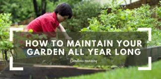 How To Maintain Your Garden All Year Long