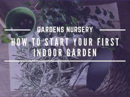 How to Start Your First Indoor Garden
