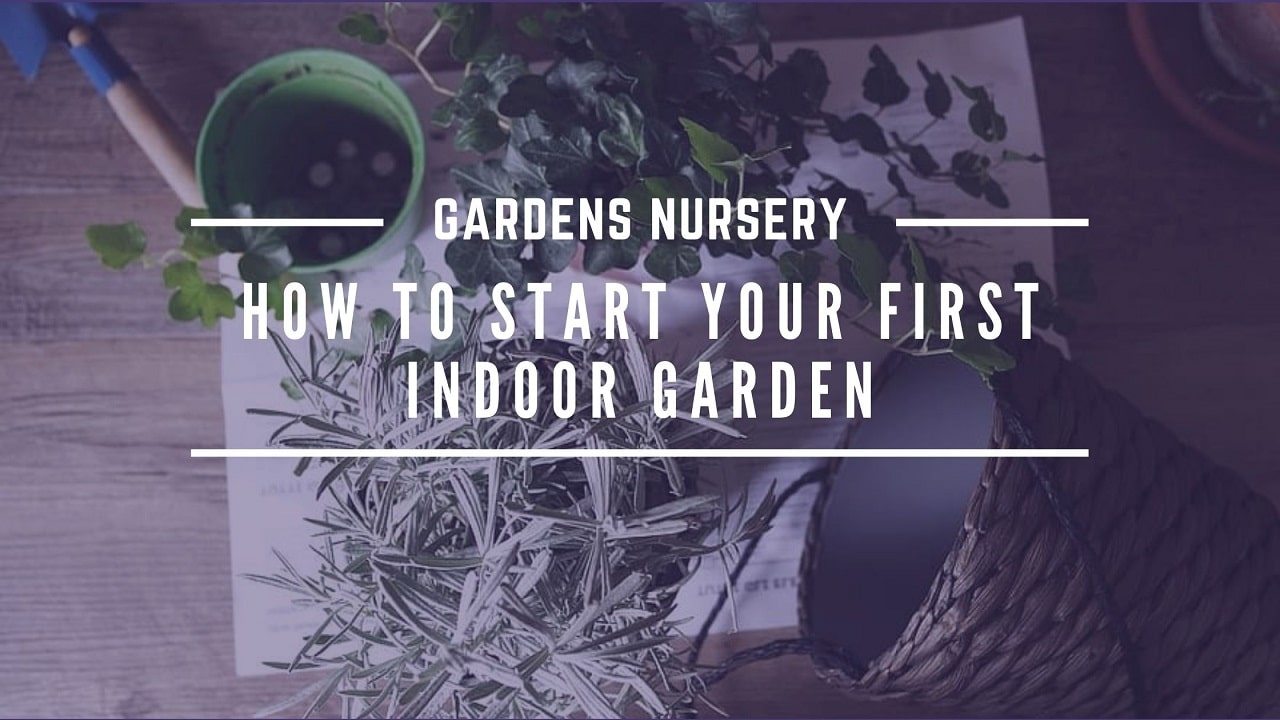 How to Start Your First Indoor Garden