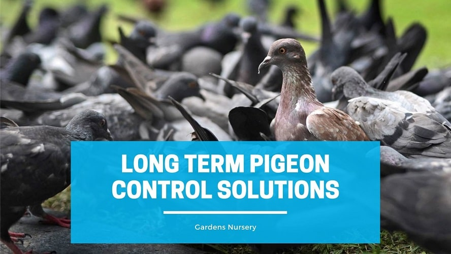 Long Term Pigeon Control Solutions