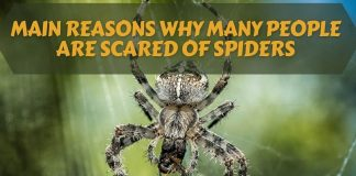Main Reasons Why Many People Are Scared Of Spiders