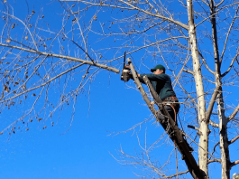 Reasons Why You Might Need to Hire an Arborist