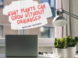 What Plants Can Grow Without Drainage