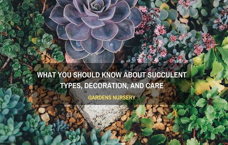 What You Should Know About Succulent Types, Decoration, and Care