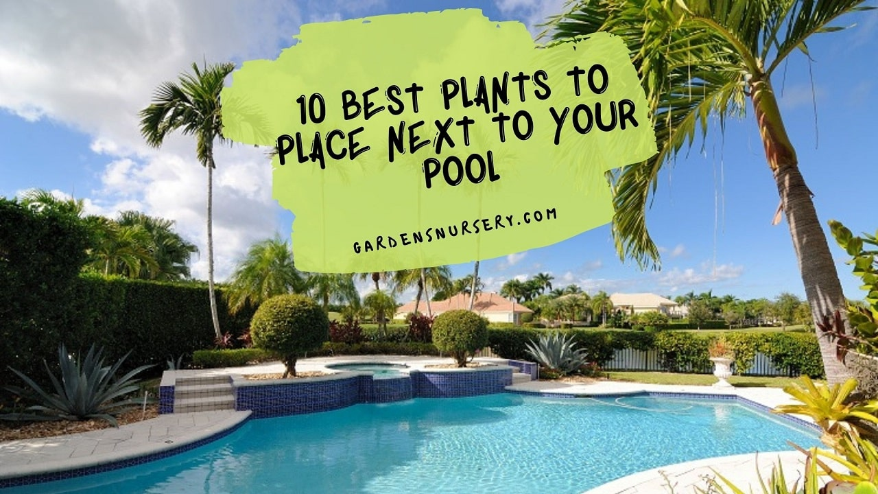 10 Best Plants To Place Next To Your Pool Area