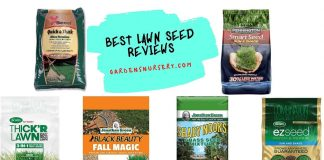 Best Lawn Seed Reviews