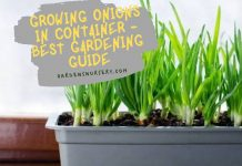 Growing Onions in Container - Best Gardening Guide