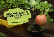 Gardening Guide to Growing Bonsai Fruit Trees