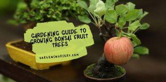 Gardening Guide to Growing Bonsai Fruit Trees