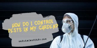 How Do I Control Pests in my Garden