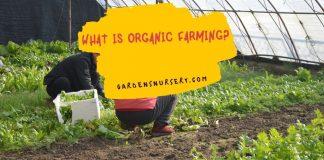 What is Organic Farming