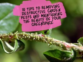 10 Tips to Removing Destructive Garden Pests and Maintaining the Bea10 Tips to Removing Destructive Garden Pests and Maintaining the Beauty of your Greenspaceuty of your Greenspace