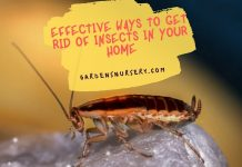 Effective Ways To Get Rid Of Insects In Your Home