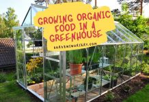Growing Organic Food In A Greenhouse