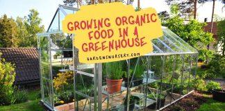 Growing Organic Food In A Greenhouse