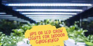 HPS or LED Grow Lights for Indoor Gardening
