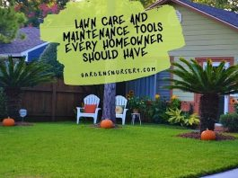 Lawn Care and Maintenance Tools Every Homeowner Should Have