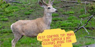 Pest Control Tip Make Your Garden A No-Feeding Zone For Deer