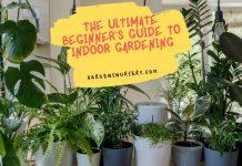 The Ultimate Beginner's Guide to Indoor Gardening