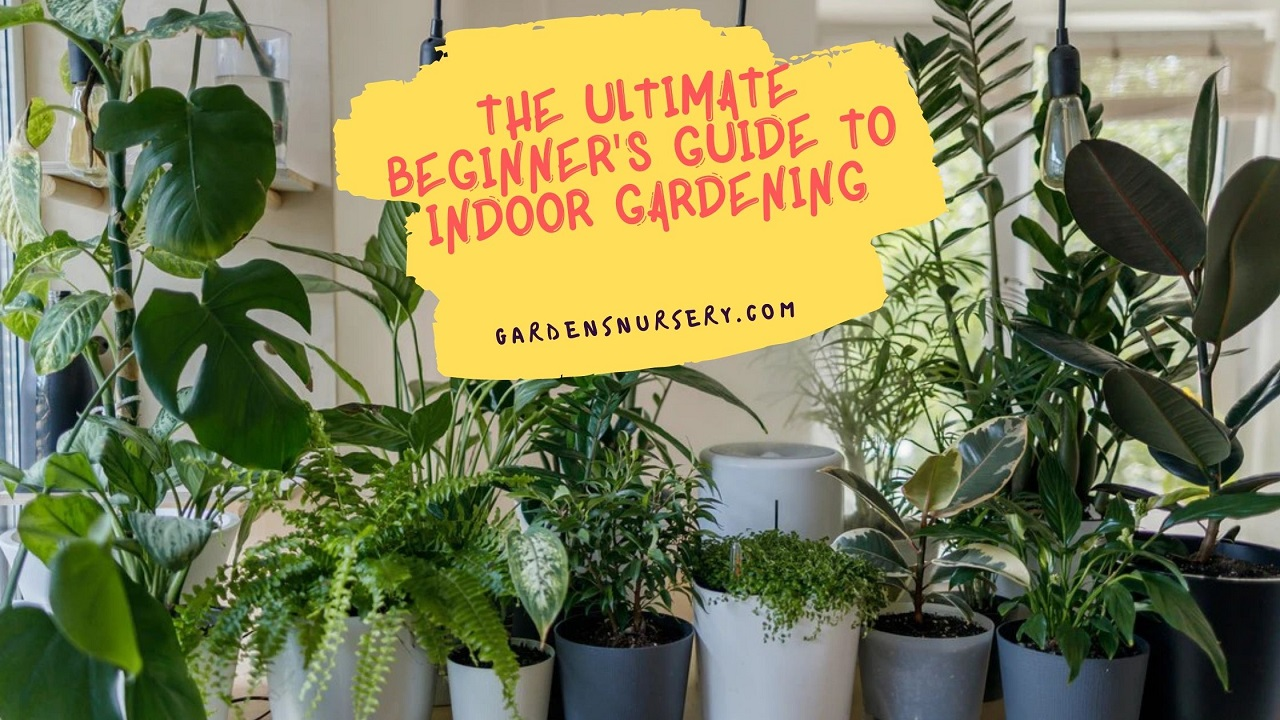 The Ultimate Beginner's Guide to Indoor Gardening