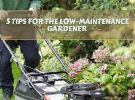 5 Tips for the Low-Maintenance Gardener