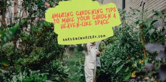 Amazing Gardening Tips to Make Your Garden a Heaven-like Space