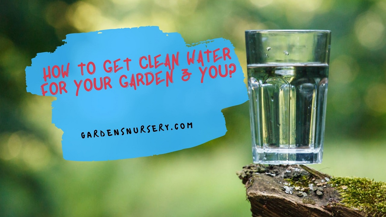 How to Get Clean Water For Your Garden & You