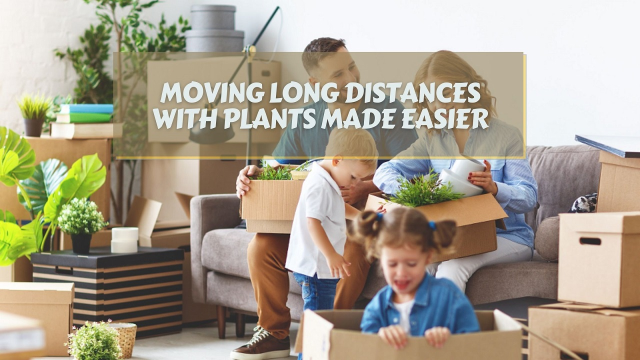 Moving Long Distances With Plants Made Easier