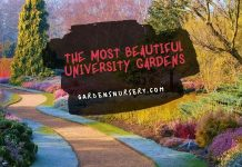 The Most Beautiful University Gardens
