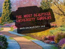 The Most Beautiful University Gardens