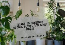 Things to Consider Before Buying LED Grow Lights