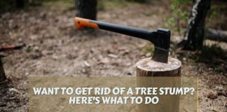 Want to Get Rid of a Tree Stump