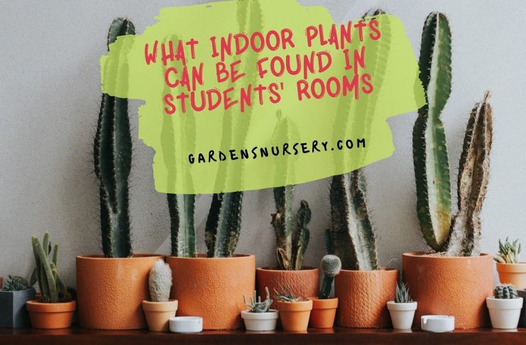 What Indoor Plants Can Be Found in Students' Rooms