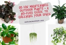 05 Low Maintenance Outdoor Plants - A No-fuss Guide to Greening Your Space