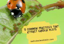 Attract Garden Pests
