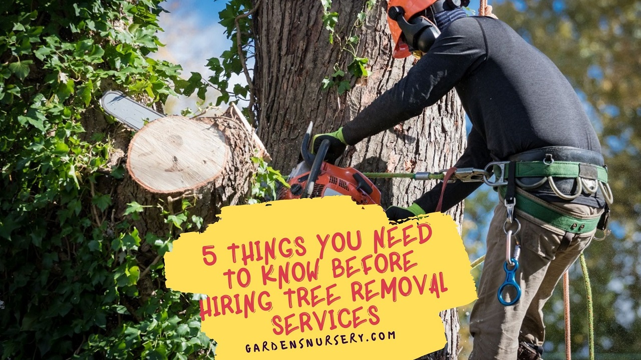5 Things You Need To Know Before Hiring Tree Removal Services