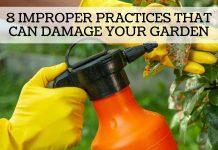 8 Improper Gardening Practices That Can Damage Your Garden