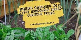 Amazing Gardening Ideas Every Homeowner Should Consider Trying