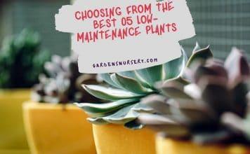 Choosing From The Best 05 Low-Maintenance Plants