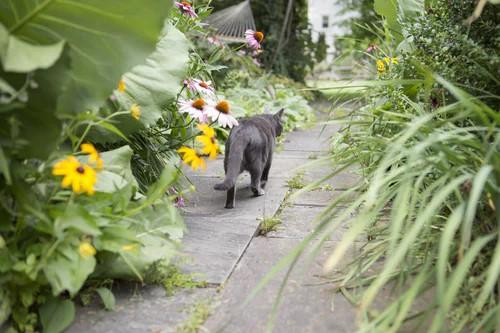 Create A Garden Pathway